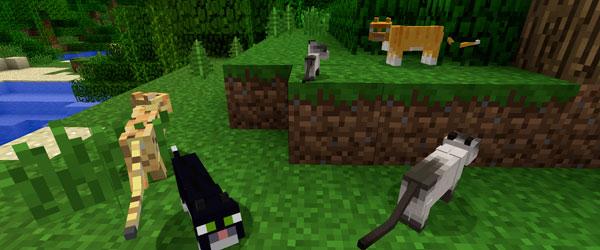 Виды кошек майнкрафте