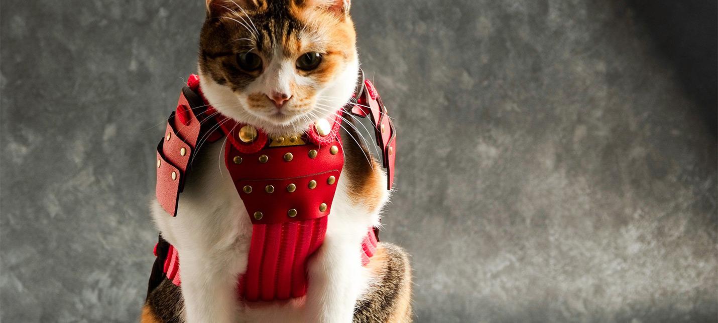 В Японии можно купить самурайскую броню для собак и кошек