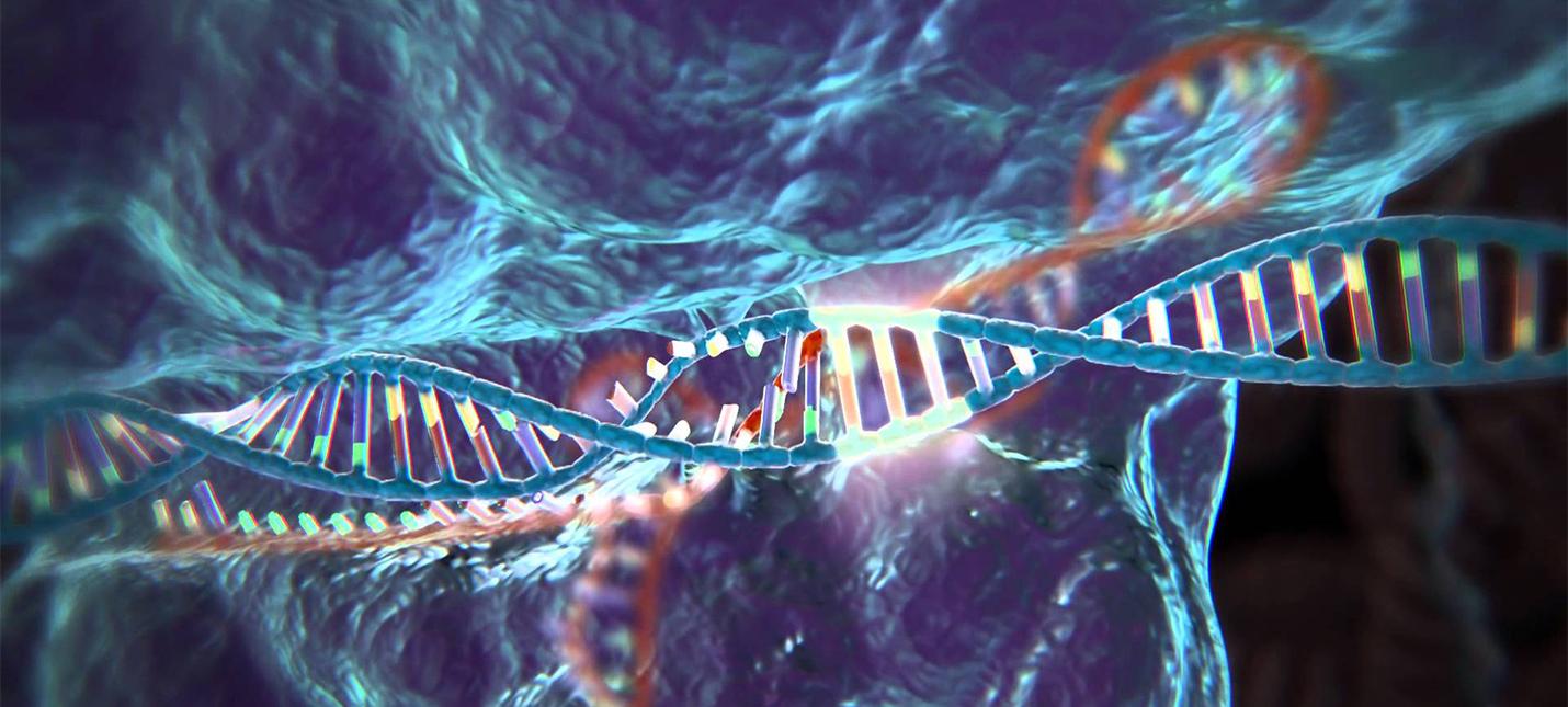 Ученым впервые удалось отредактировать гены в теле взрослого человека