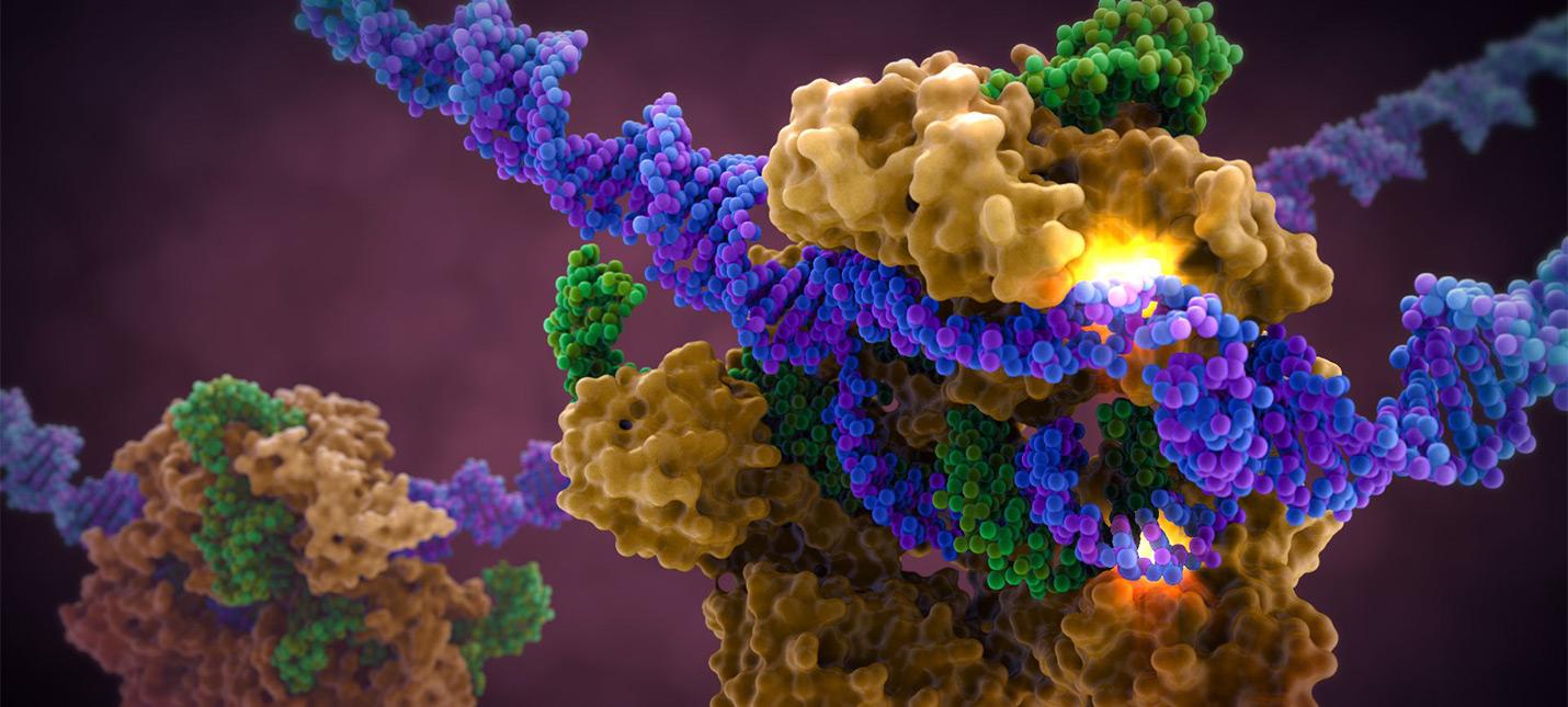 Десятки китайцев подвергаются генной модификации CRISPR для лечения рака
