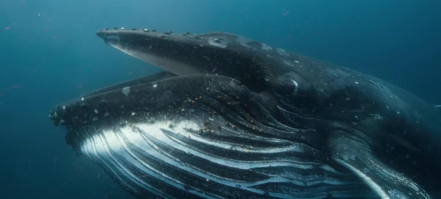 Диковинные животные и пейзажи в тизере документального мини-сериала о природе Our Planet