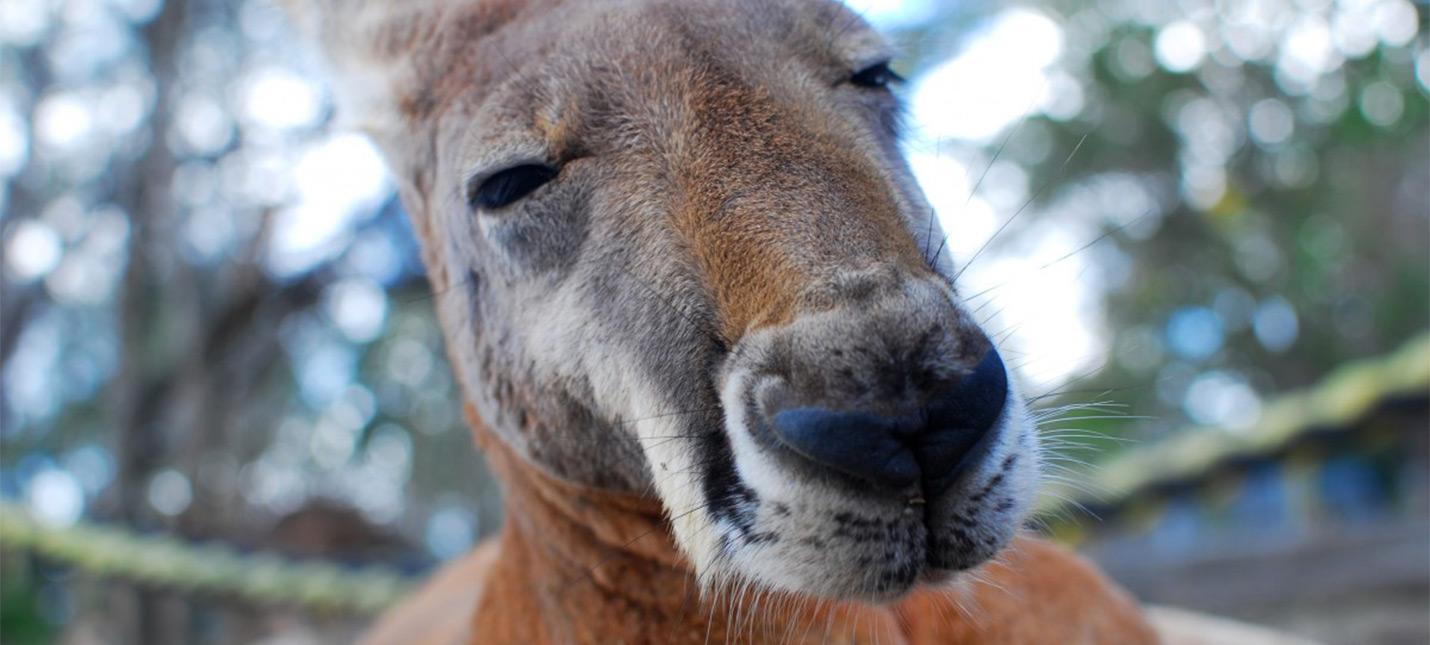 Австралийская комиссия советует властям проверить лутбоксы