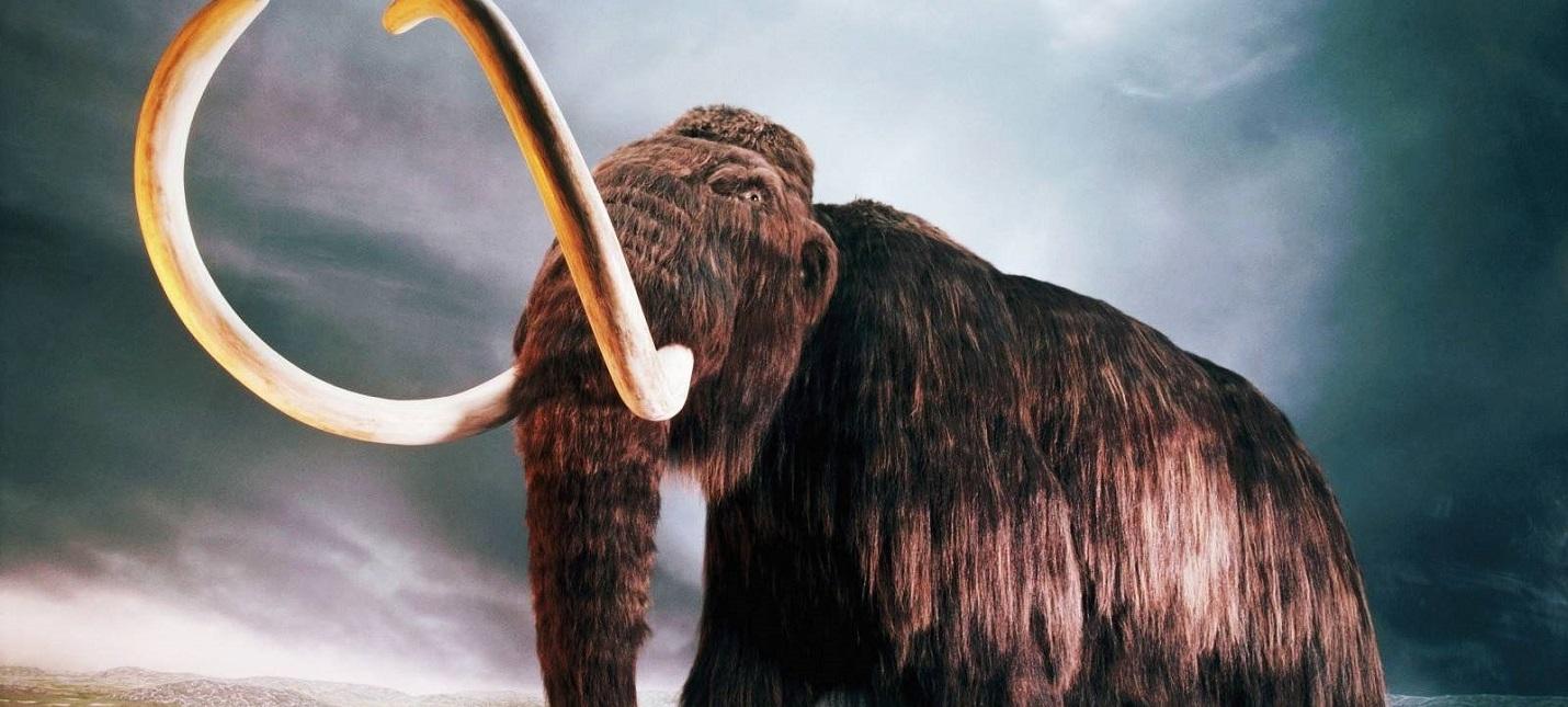 Ученые из России и Японии могут вернуть вид древнего мамонта к жизни