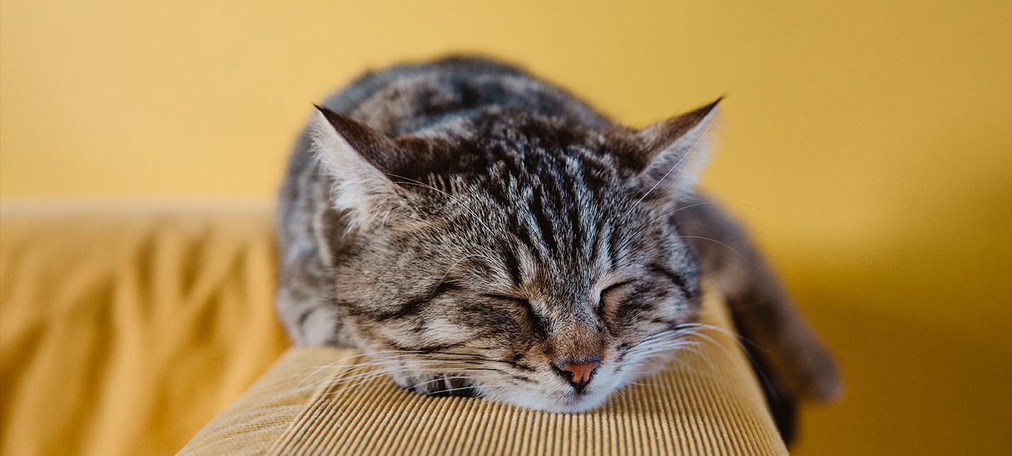 Кота вырвало на PC стримера, вырубив трансляцию Twitch