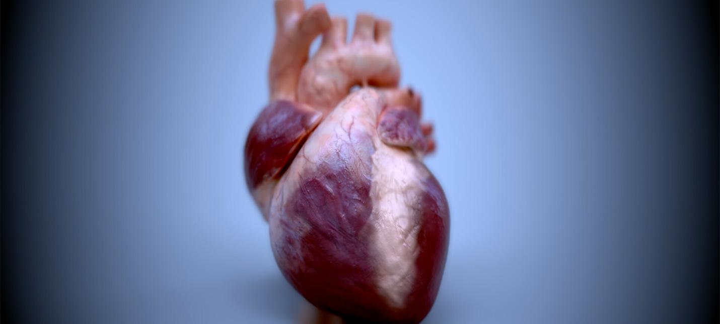 Ученые напечатали на 3D-принтере уменьшенную версию человеческого сердца