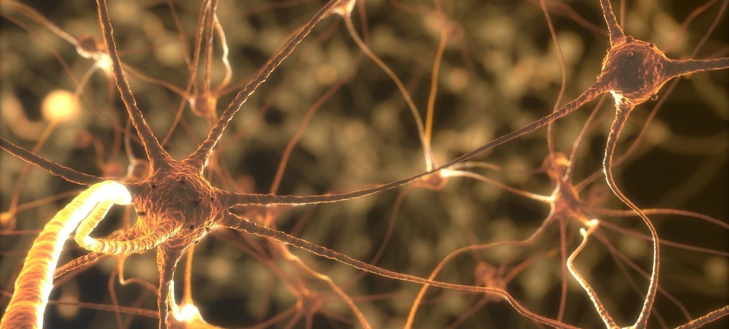 Intel хочет задействовать ИИ для восстановления поврежденных спинномозговых нервов