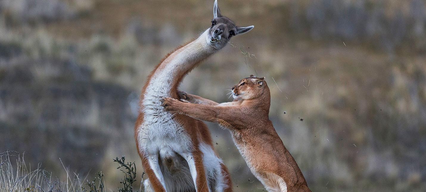Лучшие фотографии дикой природы за 2019 год напоминают о красоте Земли