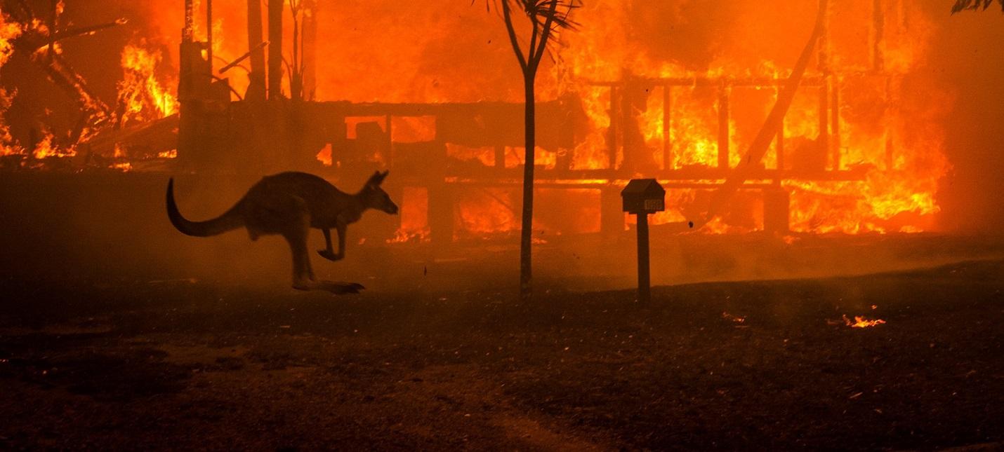 Собаки помогают людям спасать животных от пожаров в Австралии