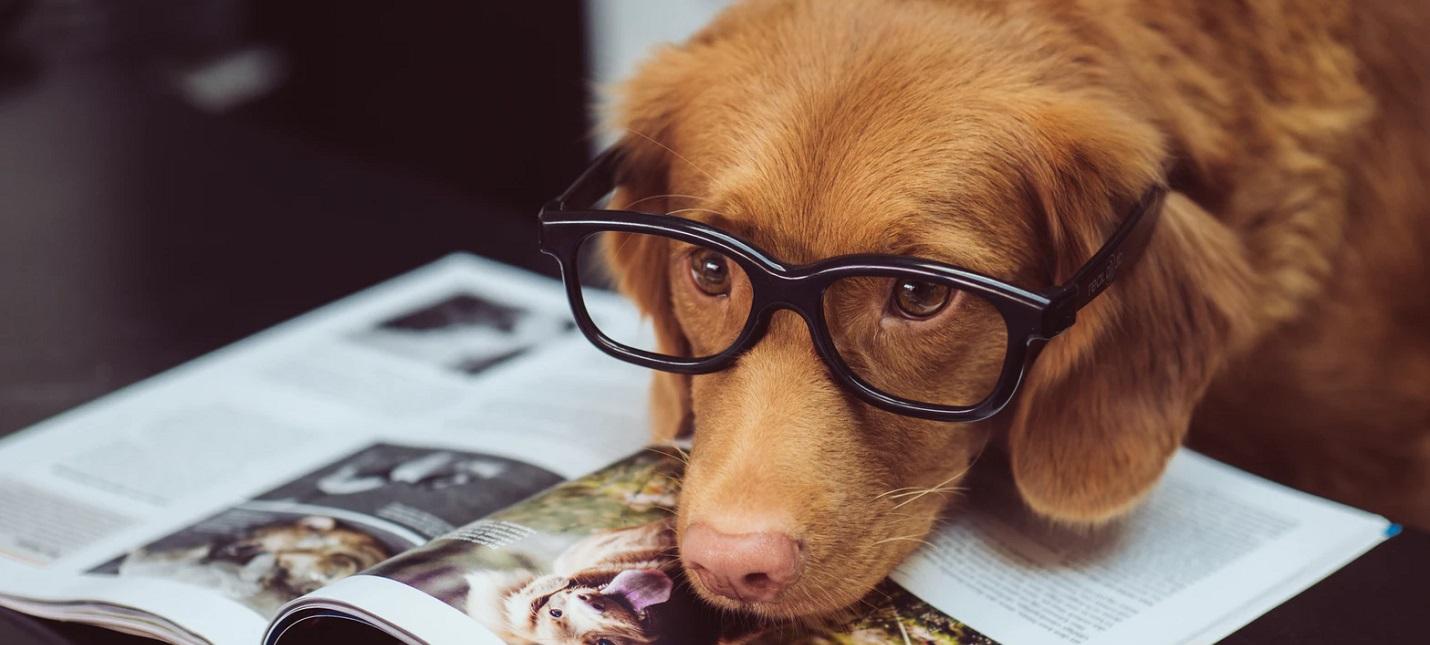 Ученые установили новый способ оценки возраста собак