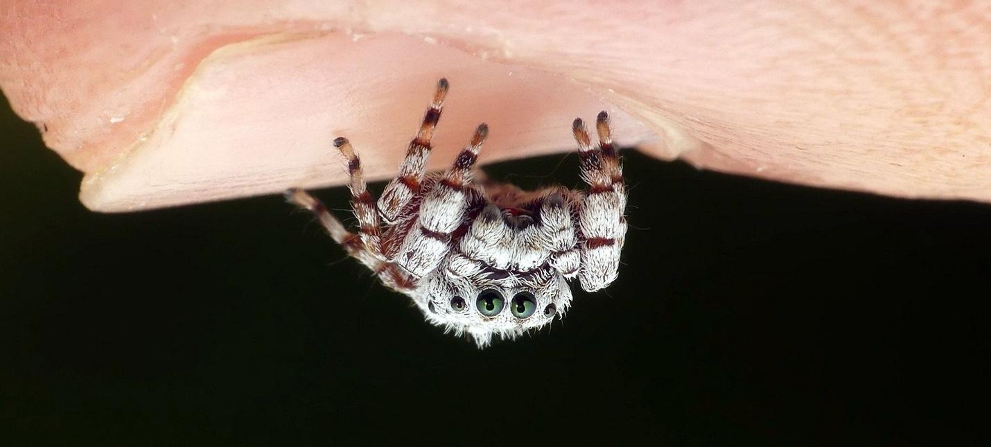 В Австралии запустили приложение Critterpedia  это аналог Shazam для пауков и змей