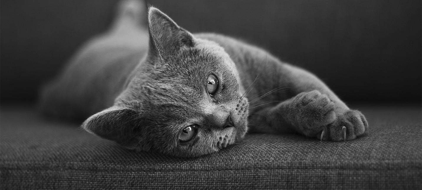 Британские ученые доказали способ, при помощи которого можно стать любимцем кошек