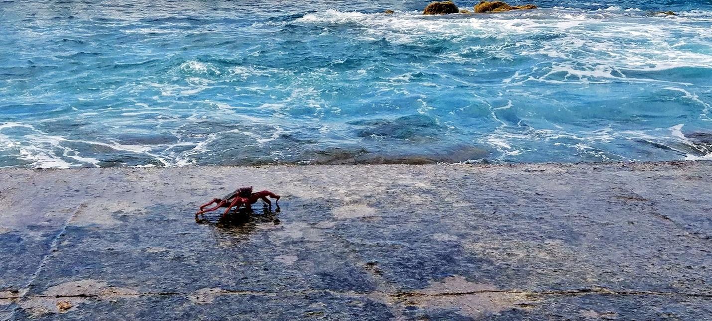 Температура Атлантического океана превысила 2900-летний рекорд