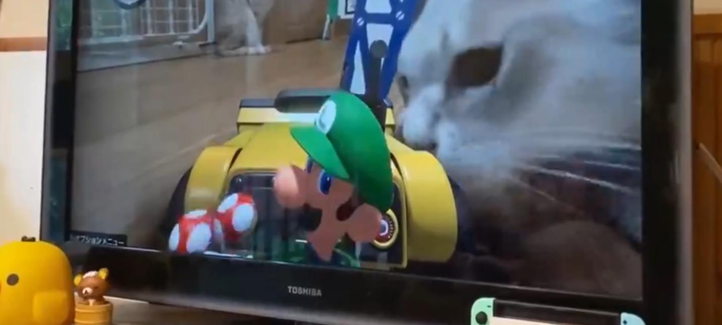 AR-игра Mario Kart Live Home Circuit с кошками в доме выглядит устрашающе