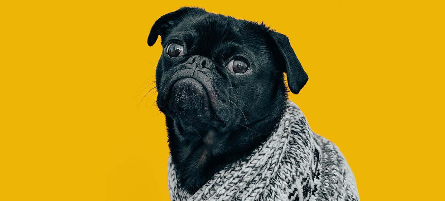 Исследование Собаки тоже испытывают кризис среднего возраста