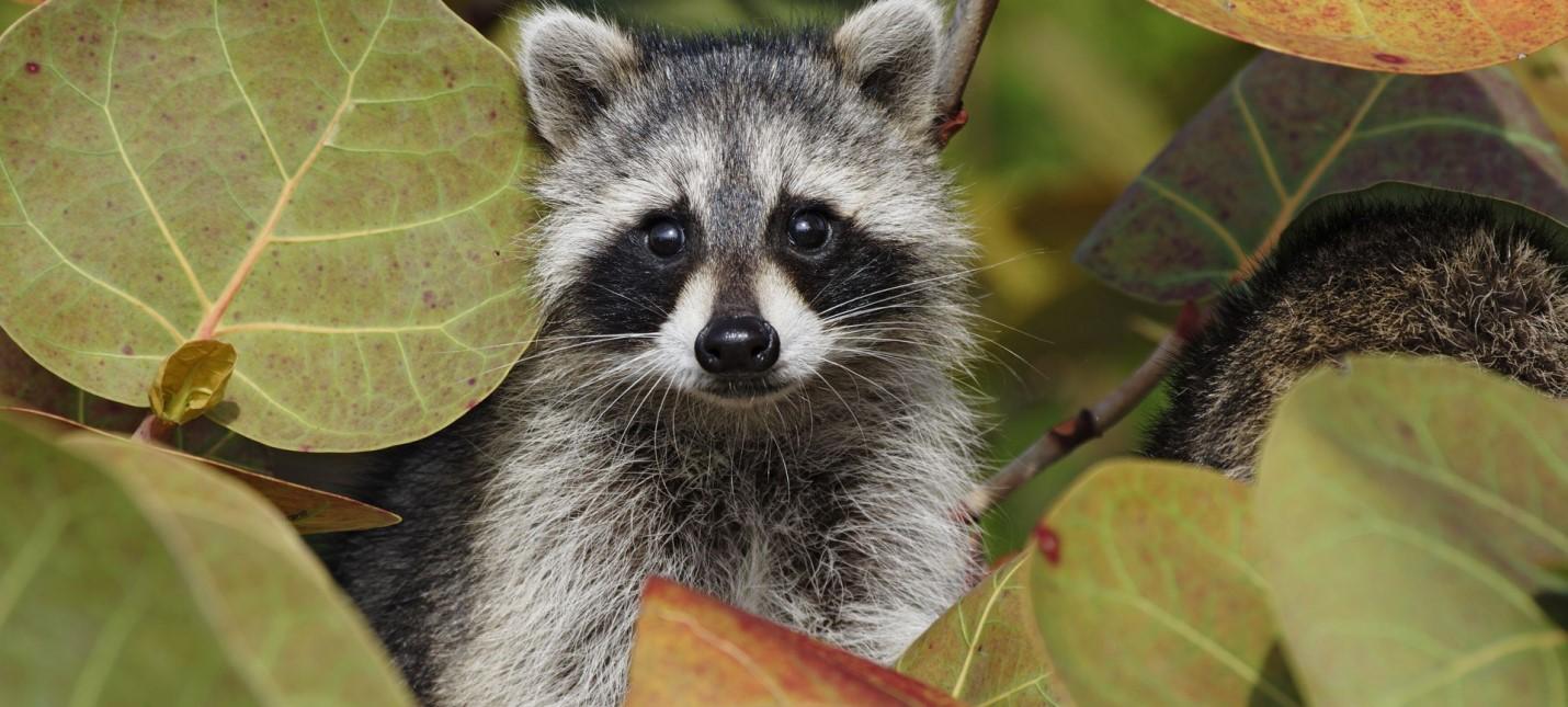 Ветераны игровой индустрии основали студию Raccoon Logic