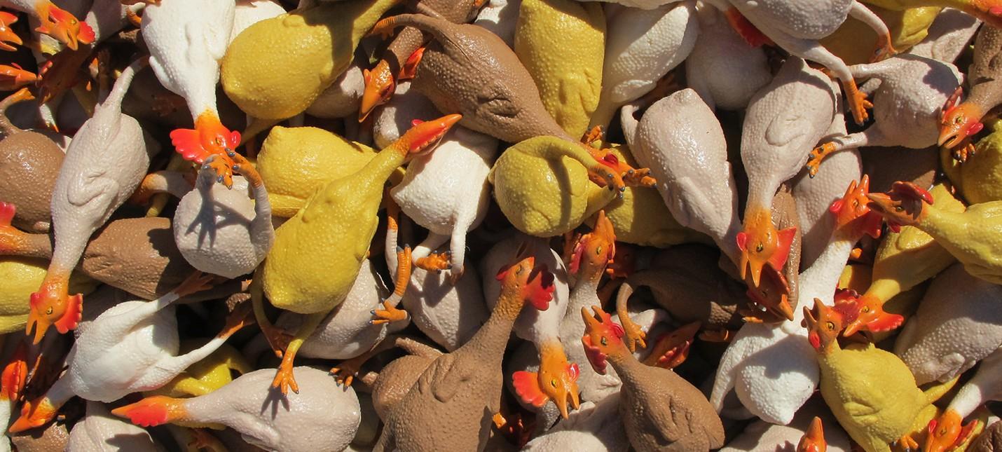Резиновые цыплята исполняют EDM