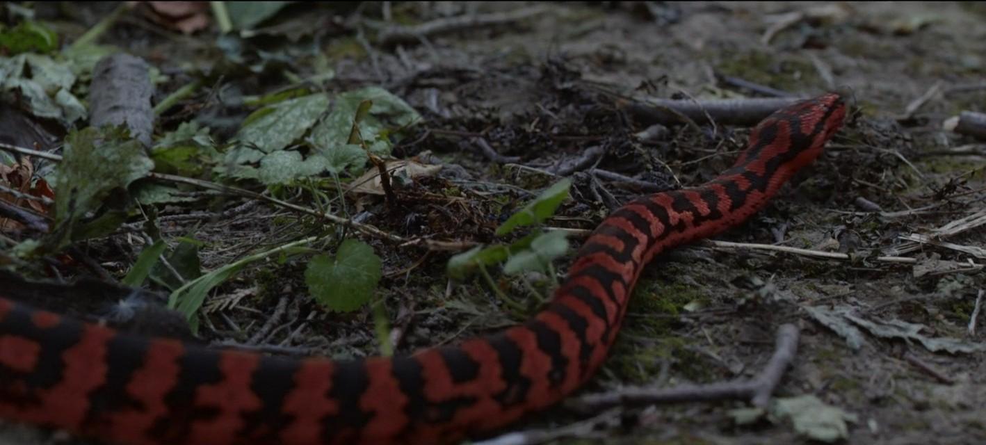 Sunday Short: Укус змеи
