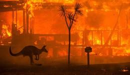 Bungie отправит австралийским пожарным деньги, полученные с продаж лимитированных футболок