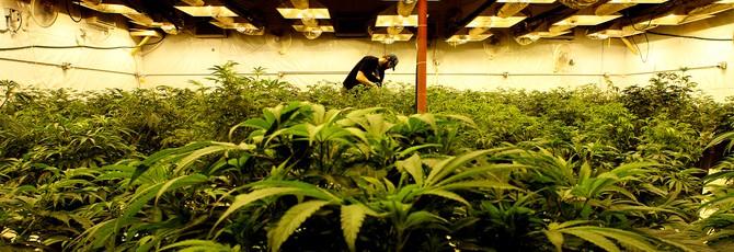 Штат Колорадо заработал $44 миллиона от налогов на марихуану