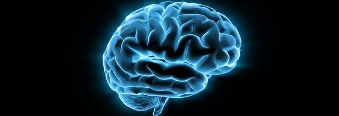 Новая техника позволяет лучше рассмотреть структуру связей в мозгу