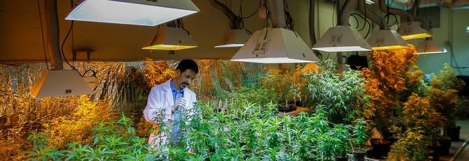 Правительство США дало добро на расширение исследований марихуаны