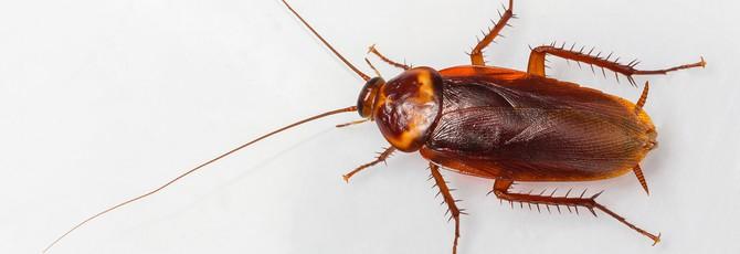 Ремонтники консолей рассказали, почему тараканы любят PS4