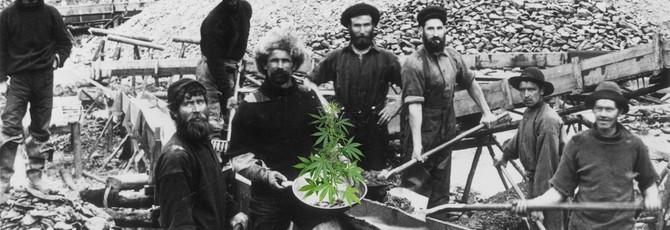 Компания по выращиванию марихуаны купила город в США