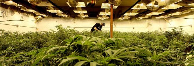 Доходы от марихуаны в США и Канаде достигнут $20 миллиардов к 2021-ому