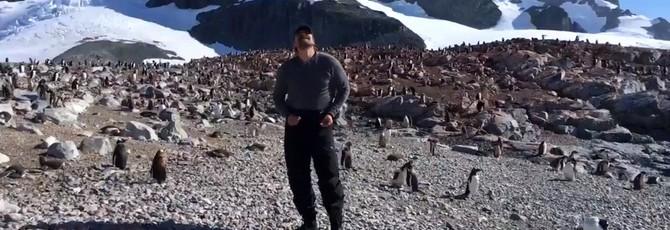 Дэвид Харбор исполнил свой танец из Stranger Things перед антарктическими пингвинами