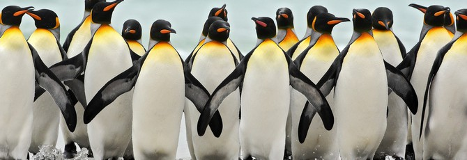 Съёмочная группа BBC Earth спасла пингвинов, нарушив собственное правило