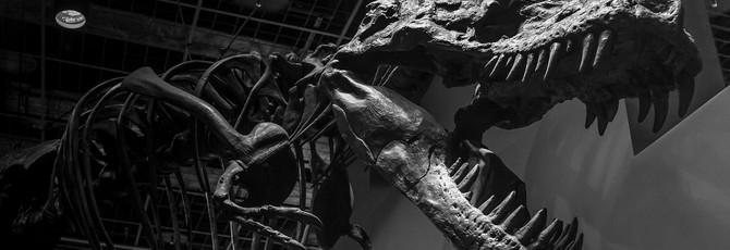 В Канаде обнаружены останки самого большого из известных тираннозавров