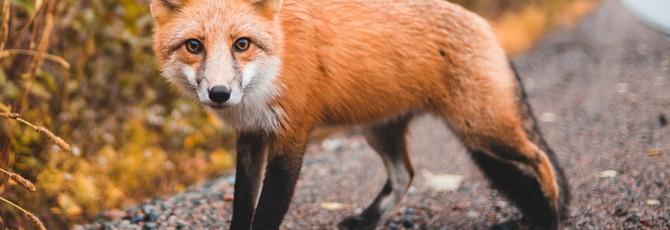 Mozilla предложила обмануть рекламные сервисы при помощи 100 рандомных вкладок браузера