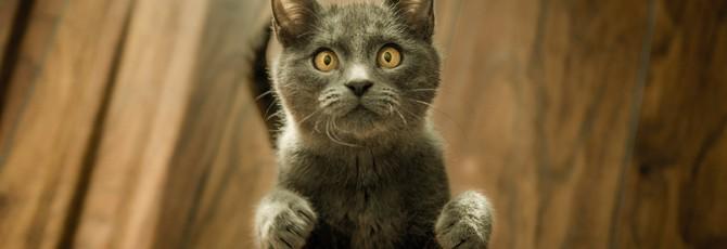 ИИ-дверца научилась не впускать в дом кота с добычей