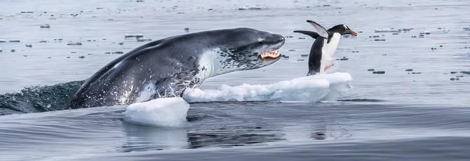 Лучшие фотографии дикой природы 2019 года