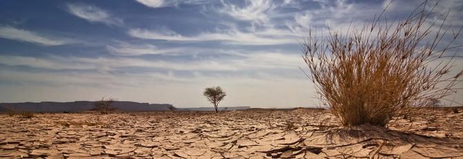 ООН: пятилетний период с 2014 по 2019 стал самым жарким в истории