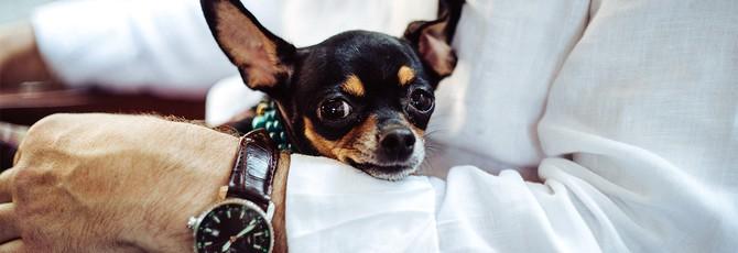 Большинство мужчин эмоциально ближе к своим собакам, чем к другим людям