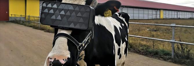 Россия номер один: Коровам выдают VR-девайсы, Роскосмос готовит космических роботов-кентавров