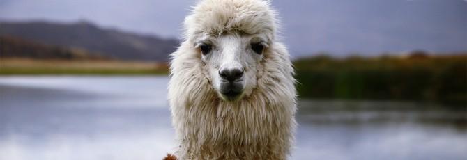 Alpine Alpaca — бесплатная пошаговая альпака на лыжах