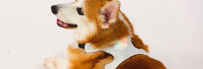 Анонсирован девайс, определяющий настроение собак