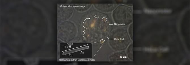 Наномоторы впервые запустили внутри живой клетки