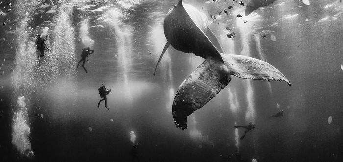 Подводные титаны