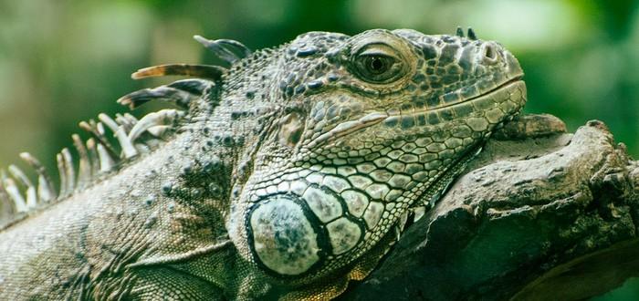 В Британии арестовали шесть человек за использование DDoS инструментов Lizard Squad