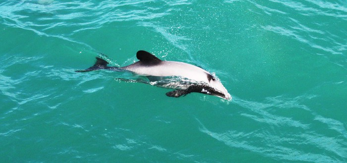 Тупые туристы убили дельфиненка ради #селфи