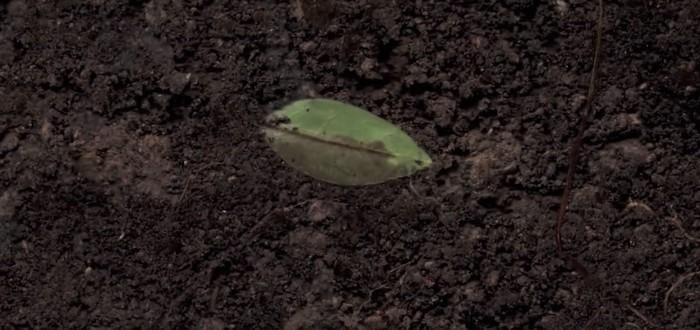 SoilCam — что скрывается под землей