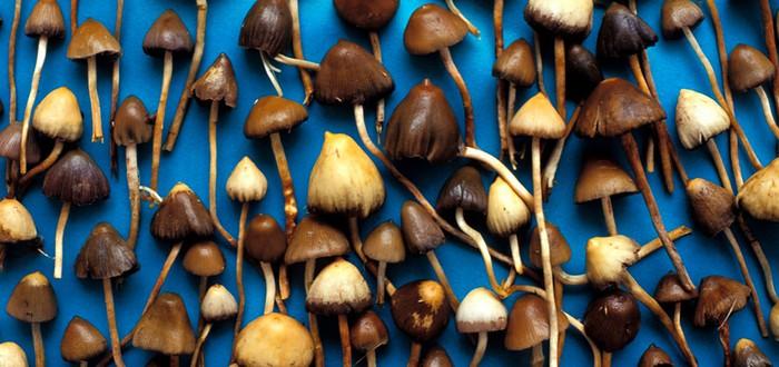 Британские ученые полагают, что магические грибы помогают от депрессии