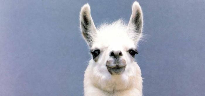 Трейлер кровавой игры про полчища лам — Vicious Attack Llama Apocalypse