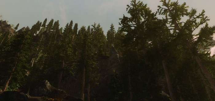 Мод Skyrim 3D Trees получил новые модели растительности
