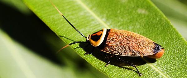 Sunday Science: почему таракана убить сложнее чем зомби