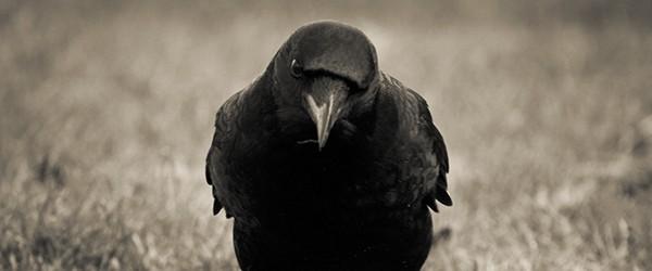 Sunday Science: почему с воронами лучше не шутить