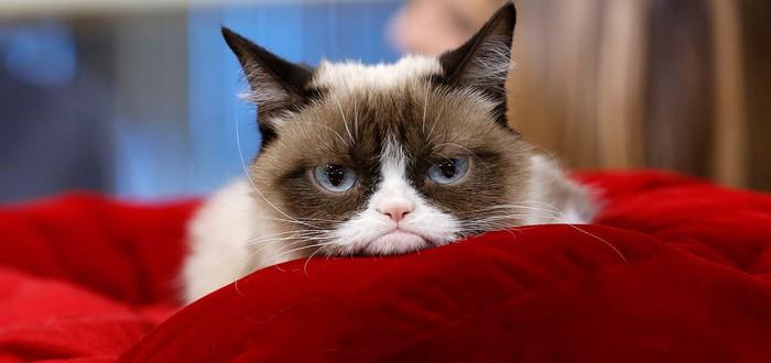 Скончалась кошка-мем Grumpy Cat